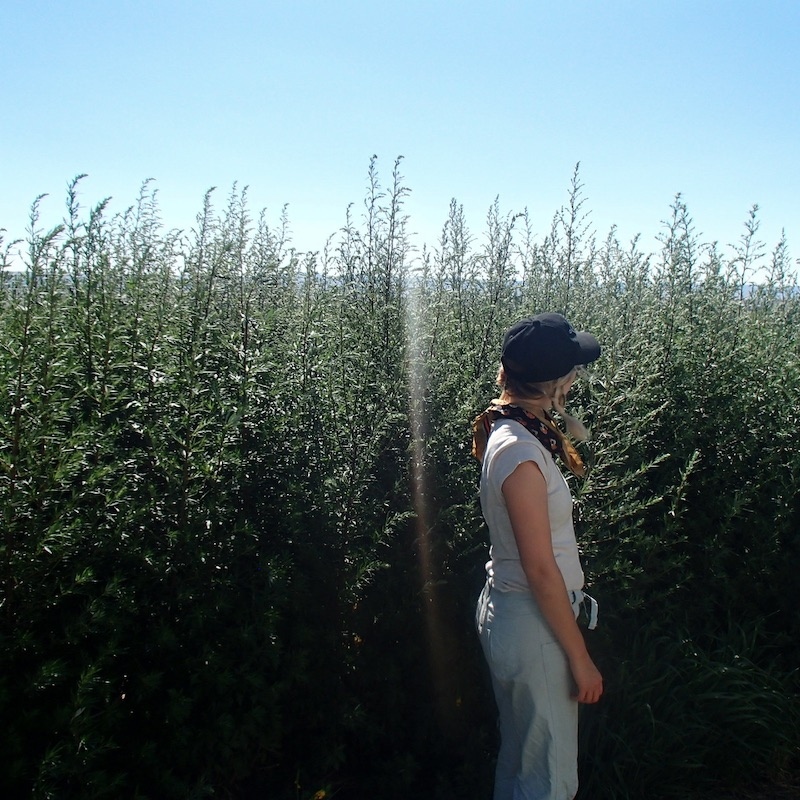 Christine with mugwort