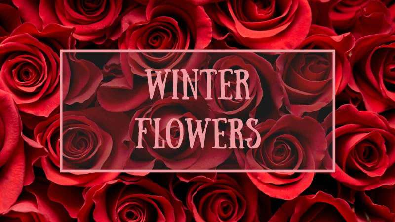 flowers-in-season