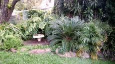 Welcome to the jungle... side garden with septic tank and bird bath... and sometimes a green snake