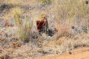 Leopard at Naankuse Wildlife Sanctuary Namibia