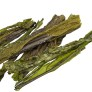 sea kelp seaweed
