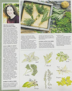 Herb illustrations by Ella Johnston Homemaker Magazine, May 2015