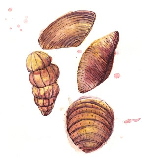 Chocolate shells, illustration (c) Ella Johnston, Brittany Ferries, Guardian Labs 2017