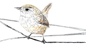 Wren (c) Ella Johnston Poem illustrations, Firewords Quarterly Winter 2014