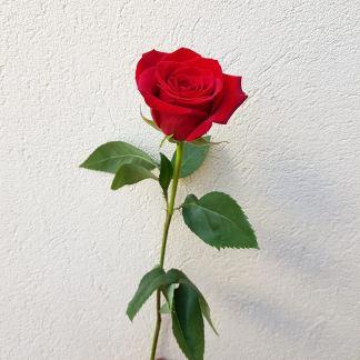 Ala Carte Flower List