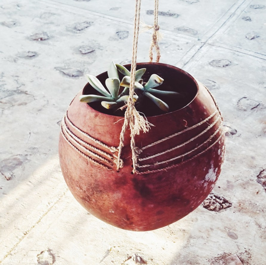 The Perfect Mexican Garden Succulent Hanging