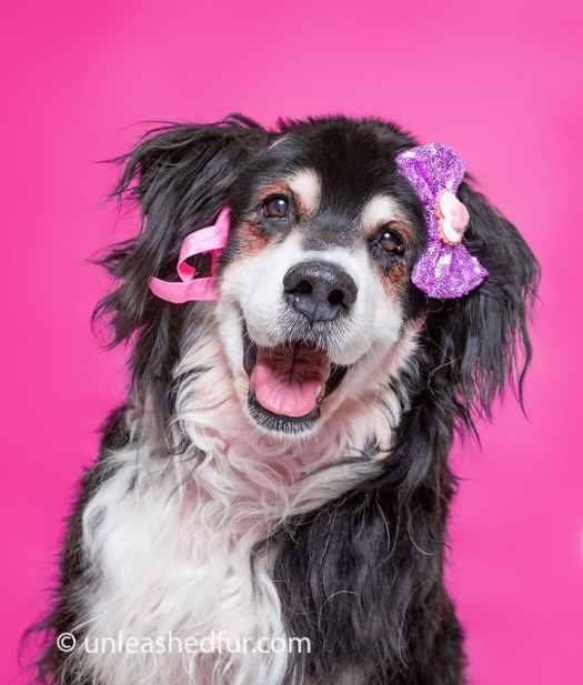 perro en adopción con lazos