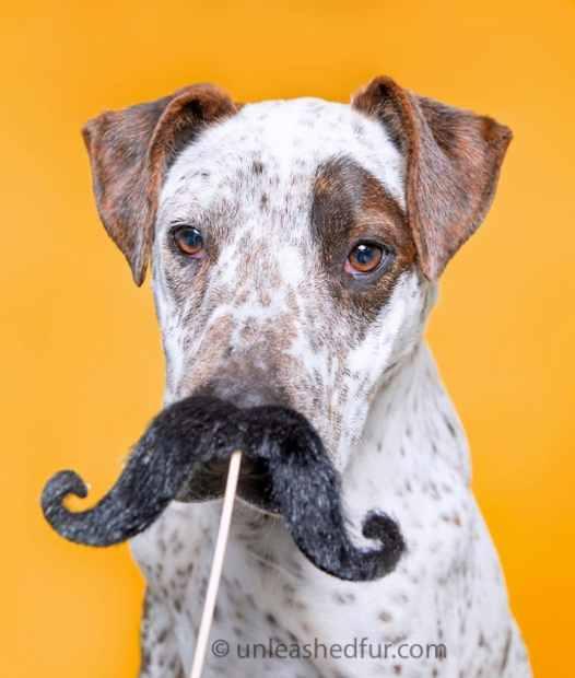 perro para adoptar con bigote postizo