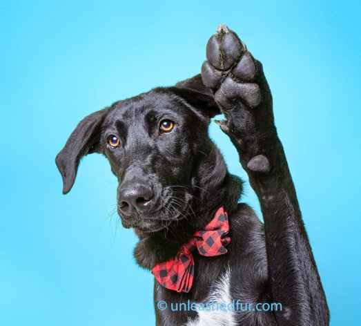 perro para adoptar levantando la pata