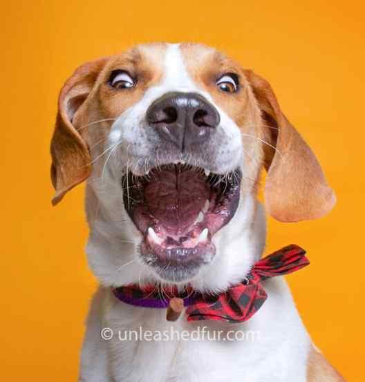 perro en adopción sacando la lengua