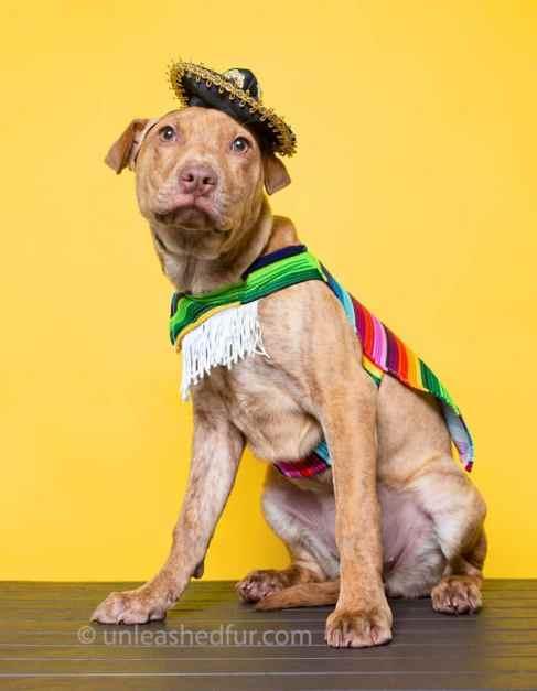 perro para adoptar disfrazado de mariachi