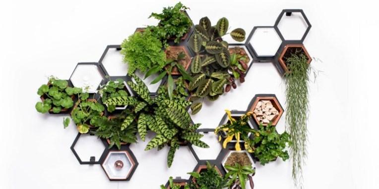 Μια μίνι ζούγκλα στον τοίχο μου! Οι κάθετοι κήποι είναι η μεγαλύτερη τάση αυτή τη στιγμή στη διακόσμηση των αστικών εξωτερικών χώρων.