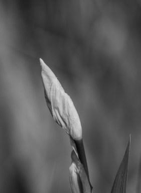photo-portrait_d_Iris-8