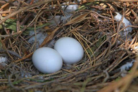 10 tipi di uova oltre a quelle di galline da usare in cucina