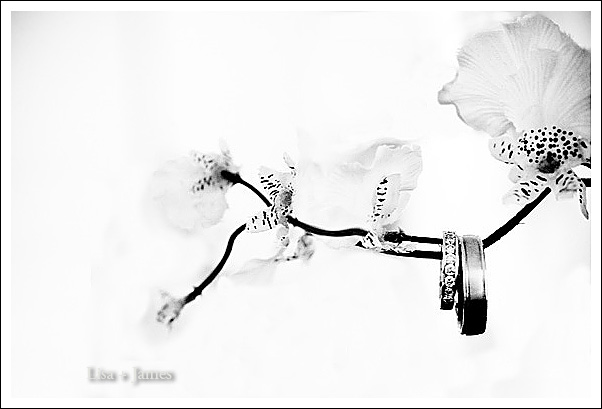 wedding rings on an orchid