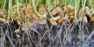 Mycorrrhizal Fungi