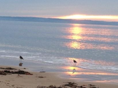 phillip island - sunset