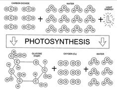 Photosynthesis Formula Game