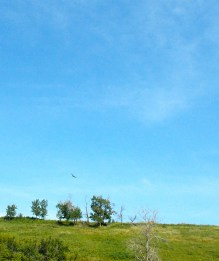 Beautiful fields and skies
