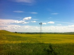 Canola fields and windmill