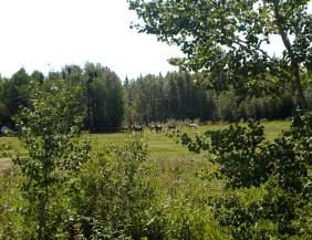 A herd of horses, near Bellis