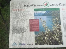 Saskatoon berry information