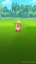 Growlithe, a somewhat rare Pokemon