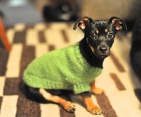 Puppy Sweater