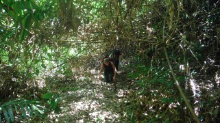 Really dense jungle required more physical exercise
