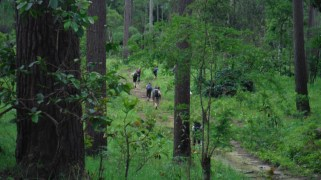 Jungle changed for a green pine forest. European style. No leeches anymore. Everybody happy.