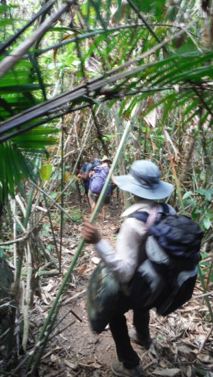 Dense jungle again. The last time. Shortly after we got lost