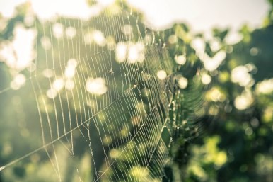 Web Of Flies & Dew