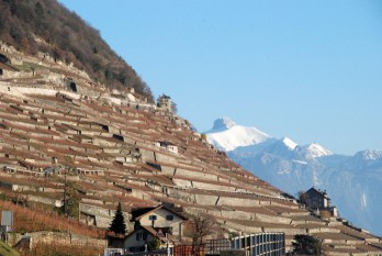 terraced_vineyards_st_saphorin_vaud_271108
