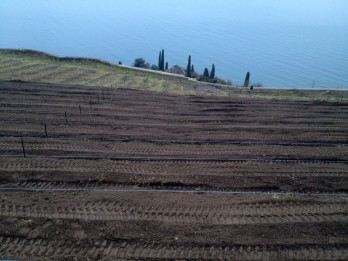 Planting new vines at Domaine Burignon in December