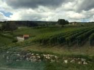 Vineyards in Neuchatel, above the lake
