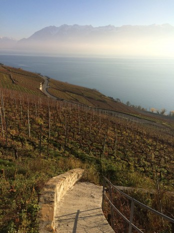 Coloured triangles throughout the vines serve as signs for helicopters, where to spray what