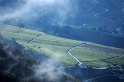 vineyard mist, Miège