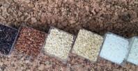 Italy Ideariso rice_300516