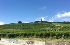 Vineyards, Féchy, Vaud