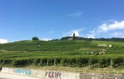 Vineyards, Féchy, Vaud