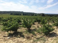DomaineCharvin vines_200916