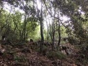 Grotta Su Marmuri woods_211016