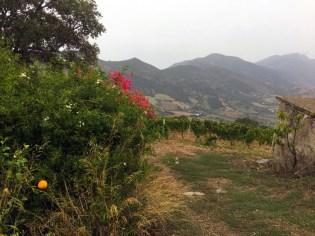 Sardinia highland vineyards rain_211016