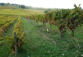 Various pruning methods were tried in dry Sagrantino's early days
