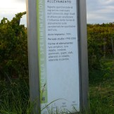 Visitors will find educational information in the vineyard and the cellar
