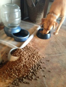 blog-zookeeper-oops-dog-food