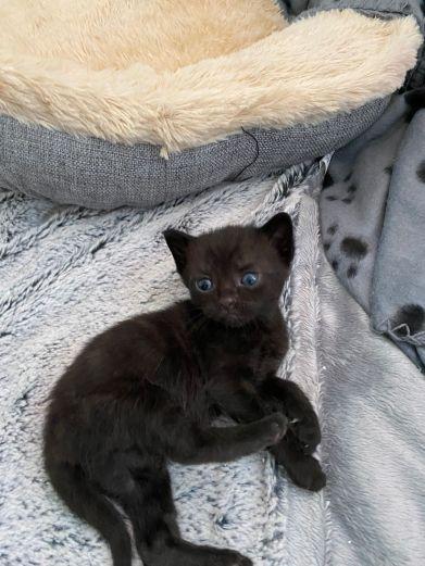 Erick the Kitten