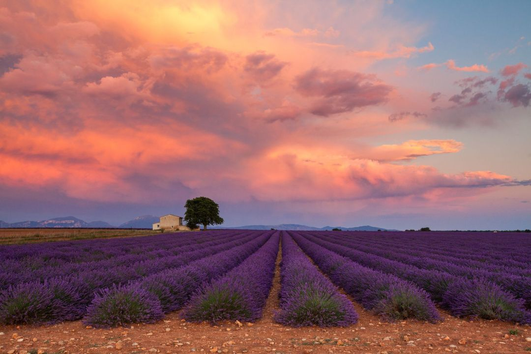 Lavender field on sunset, Provence, France