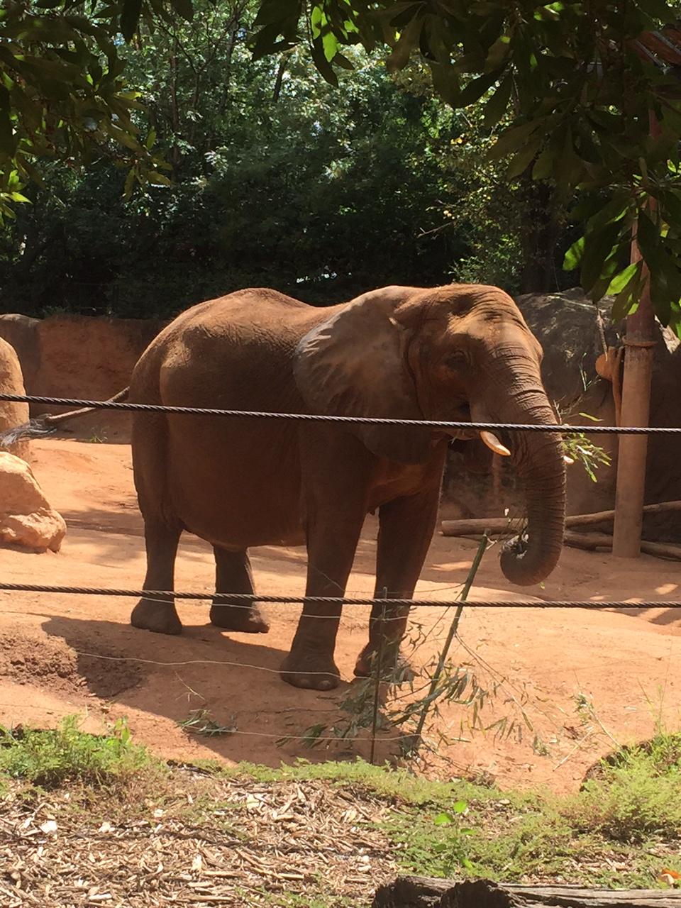 world elephant day the