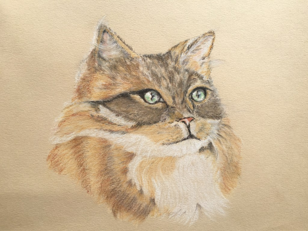 The Pastel Cat Project